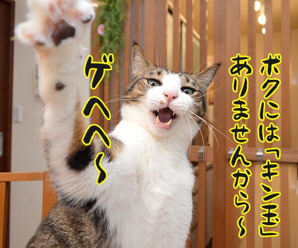 そこのハゲ、答えたまえ 猫の写真で4コマ漫画 3コマ目ッ