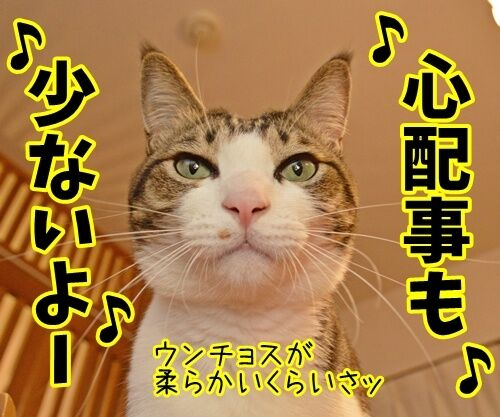 天体観測 其の二 猫の写真で4コマ漫画 2コマ目ッ