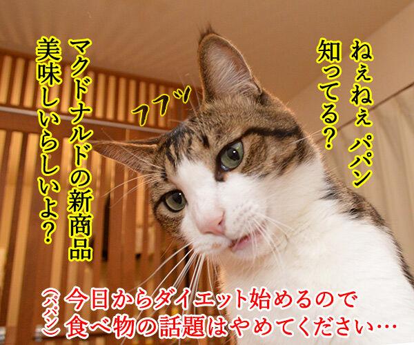 パパンはダイエット始めましたッ 猫の写真で4コマ漫画 1コマ目ッ