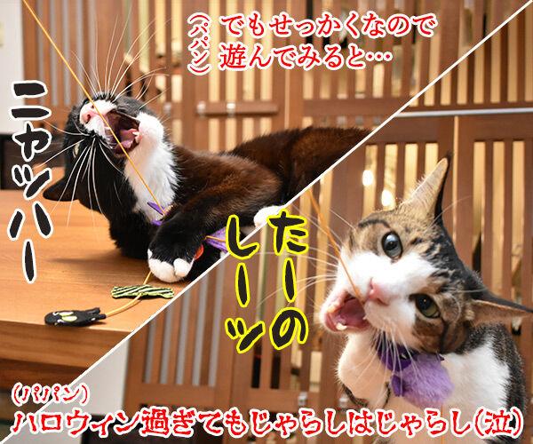 PECOBOXを初めて購入してみたのッ 猫の写真で4コマ漫画 5コマ目ッ