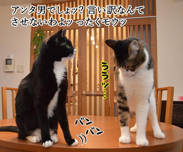 ポイズン 猫の写真で4コマ漫画 1コマ目ッ