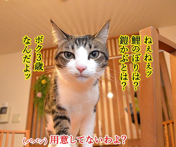 こどもの日 猫の写真で4コマ漫画 2コマ目ッ