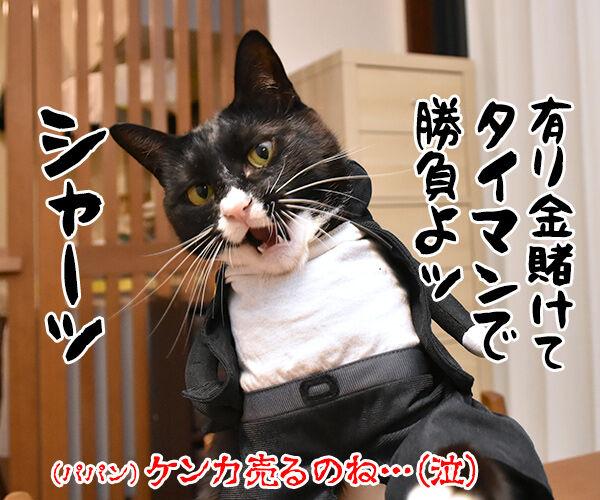 『ニャにもん』で猫の名刺データが作れるのよッ 猫の写真で4コマ漫画 4コマ目ッ