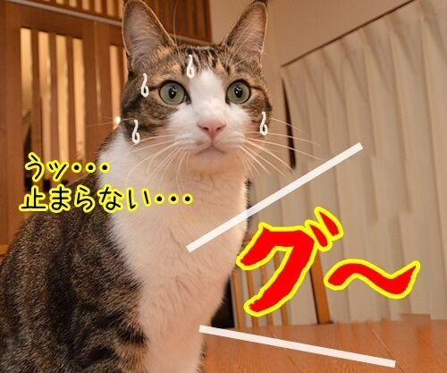 新入社員 あずき 其の二 猫の写真で4コマ漫画 2コマ目ッ