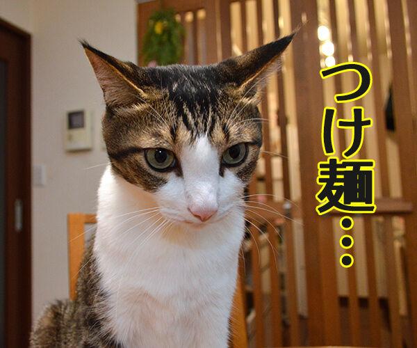 ダレのモノマネでしょうかッ? 猫の写真で4コマ漫画 2コマ目ッ