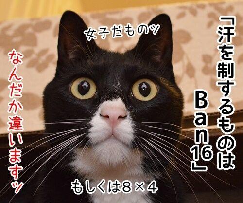 国語の授業 其の一 猫の写真で4コマ漫画 3コマ目ッ