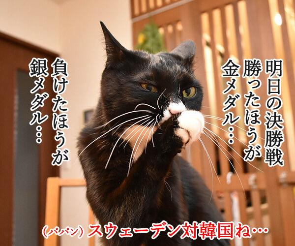 カーリング女子がメダル獲得なのッ 猫の写真で4コマ漫画 3コマ目ッ