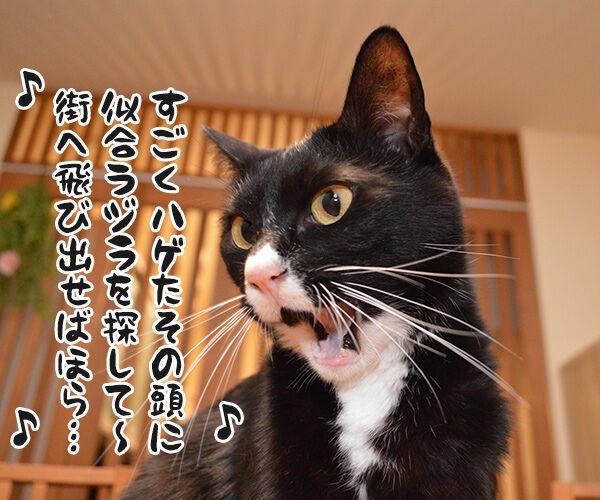 元気を出して(竹内まりや) 猫の写真で4コマ漫画 3コマ目ッ