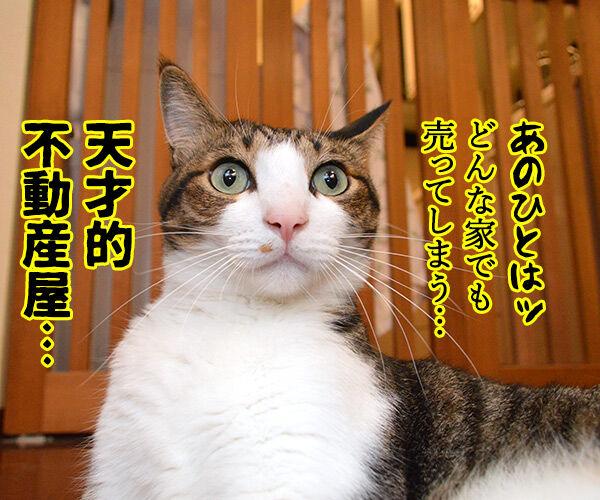 家売るオンナ 私に売れない家はないッ!! 猫の写真で4コマ漫画 1コマ目ッ