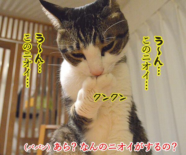 クサイ理由 猫の写真で4コマ漫画 2コマ目ッ