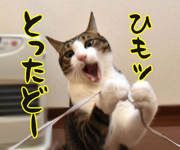 あずきさんとひもであそぶ 猫の写真で4コマ漫画 2コマ目ッ