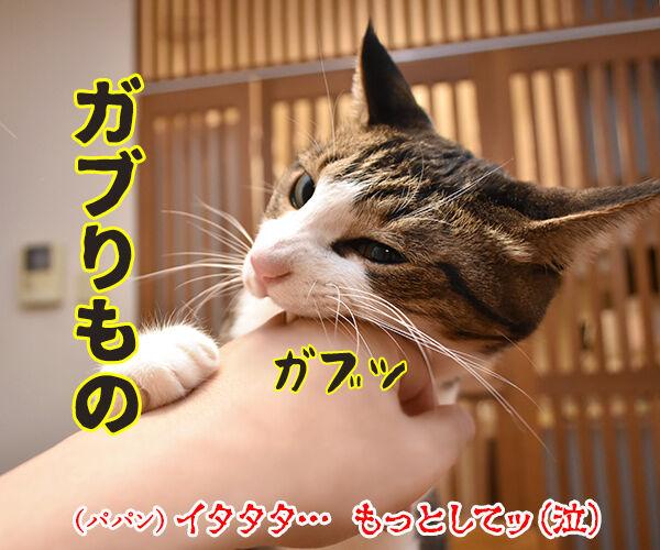今までにした『かぶりもの』を集めてみたよッ 猫の写真で4コマ漫画 3コマ目ッ