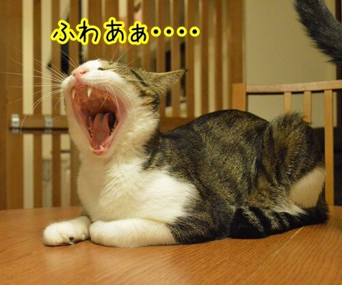お願いがあるの 猫の写真で4コマ漫画 2コマ目ッ