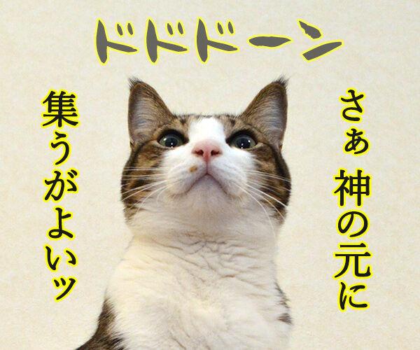 私は神…… 猫の写真で4コマ漫画 3コマ目ッ
