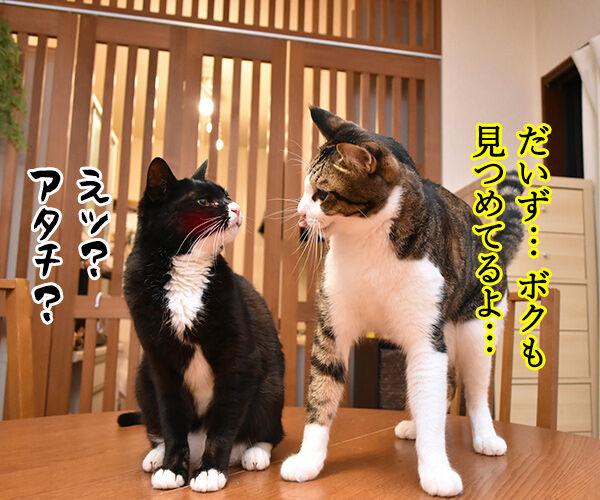 あなただけ見つめてる 猫の写真で4コマ漫画 2コマ目ッ