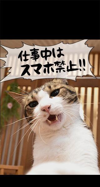 猫に叱られたい人のためのロック画面なのッ 猫の写真で4コマ漫画 ロック画面2