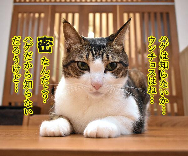 ウンチョスは自粛しなくちゃなのッ 猫の写真で4コマ漫画 2コマ目ッ