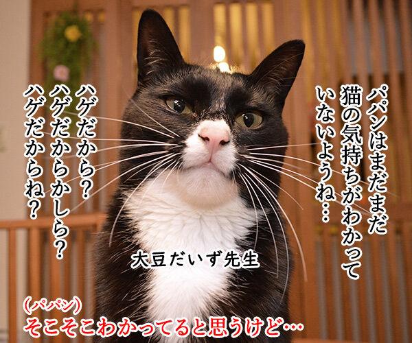 教えてッ だいず先生ッ 其の一 猫の写真で4コマ漫画 1コマ目ッ