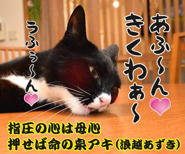 疲れた時は 猫の写真で4コマ漫画 4コマ目ッ