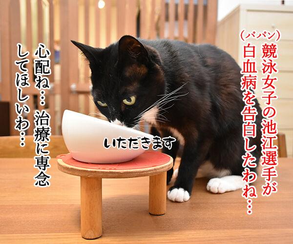 五輪相の『ガッカリ』発言に批判殺到なのッ 猫の写真で4コマ漫画 1コマ目ッ