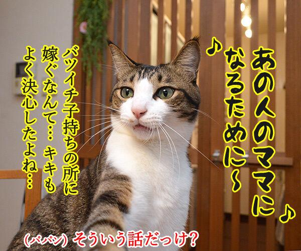 「魔女の宅急便」を見たから 猫の写真で4コマ漫画 2コマ目ッ