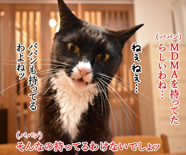 沢尻エリカがMDMA所持で逮捕されちゃったのよッ 猫の写真で4コマ漫画 2コマ目ッ