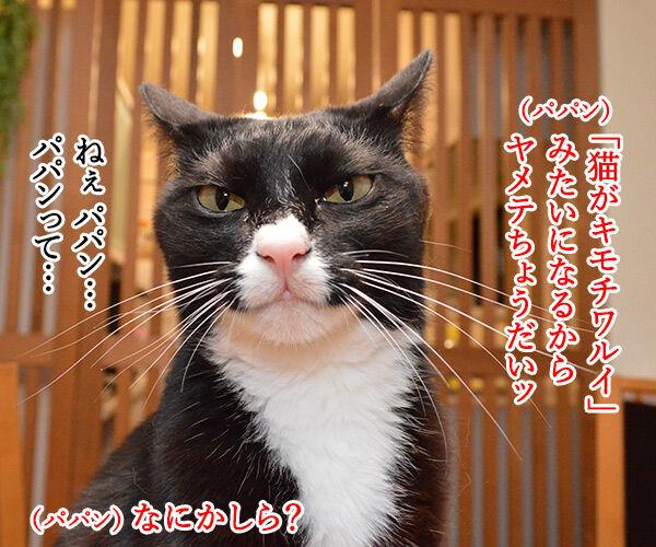 「ねこのきもち」まだぁ? 猫の写真で4コマ漫画 3コマ目ッ