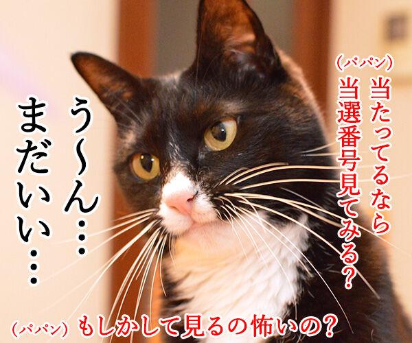 えっ?ウソ?当たってる…… 猫の写真で4コマ漫画 4コマ目ッ
