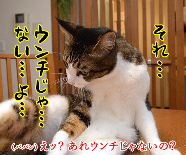 ちゃんと砂かけてよね 猫の写真で4コマ漫画 3コマ目ッ