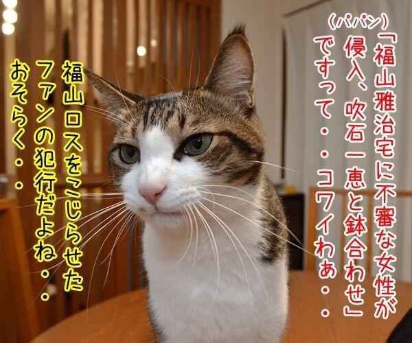 福山雅治宅に不審な女性が侵入ですってッ 猫の写真で4コマ漫画 1コマ目ッ