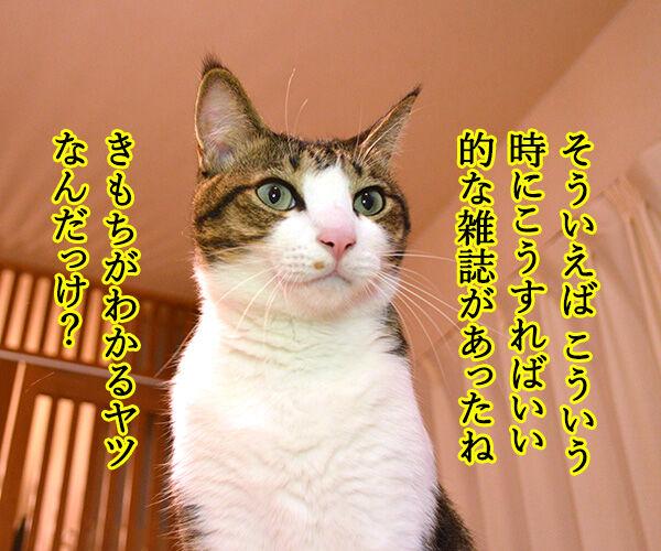 きもちがわかるやつ 猫の写真で4コマ漫画 2コマ目ッ