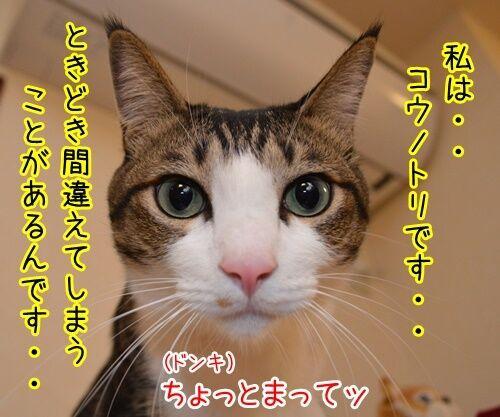 明日、ママがいない 其の二 猫の写真で4コマ漫画 3コマ目ッ