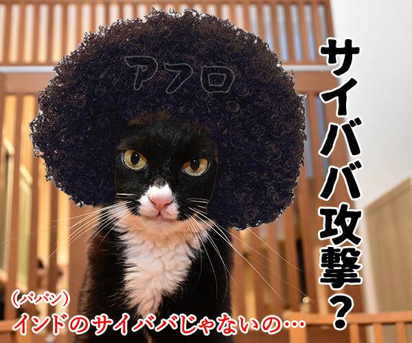 ウィスルによる大規模サイバー攻撃があったんですってッ 猫の写真で4コマ漫画 2コマ目ッ