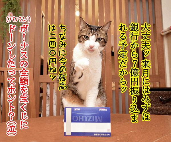 ネコ用ベッドが欲しいのよッ 猫の写真で4コマ漫画 4コマ目ッ