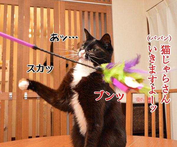 きょうは5月7日だから 猫の写真で4コマ漫画 1コマ目ッ