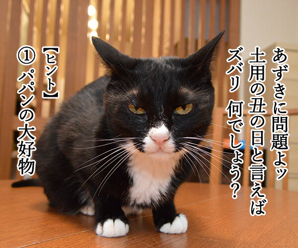 土用の丑の日でクイズなの 猫の写真で4コマ漫画 1コマ目ッ