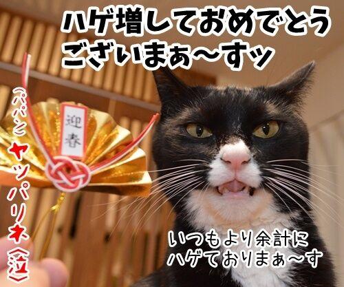 元旦だから新年のご挨拶 猫の写真で4コマ漫画 4コマ目ッ