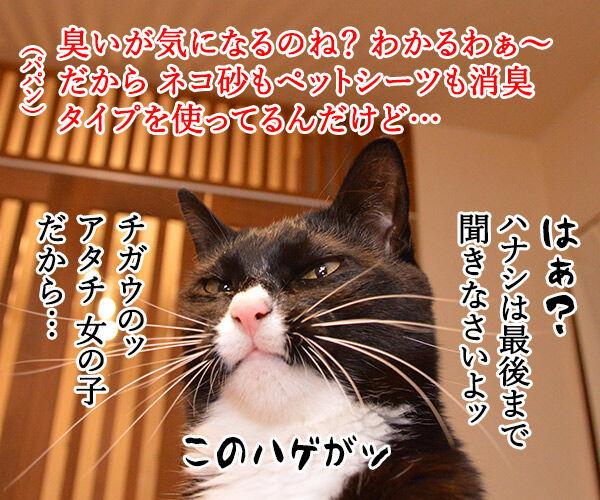 トイレのコトで話があるの 猫の写真で4コマ漫画 3コマ目ッ