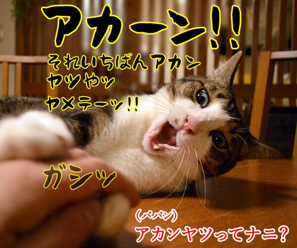 あなたが留守の時 ペットは何してる? 猫の写真で4コマ漫画 2コマ目ッ