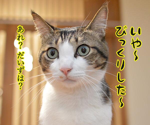 だいずさんは○○ 猫の写真で4コマ漫画 3コマ目ッ