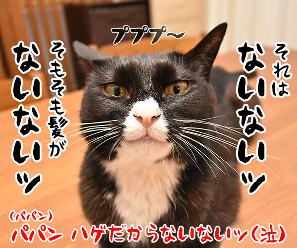 梅雨あるある 猫の写真で4コマ漫画 4コマ目ッ