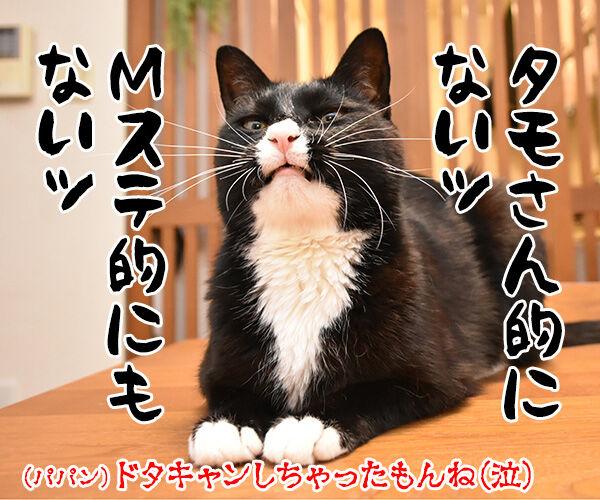 りゅうちぇるのタトゥーに賛否両論なのよッ 猫の写真で4コマ漫画 4コマ目ッ