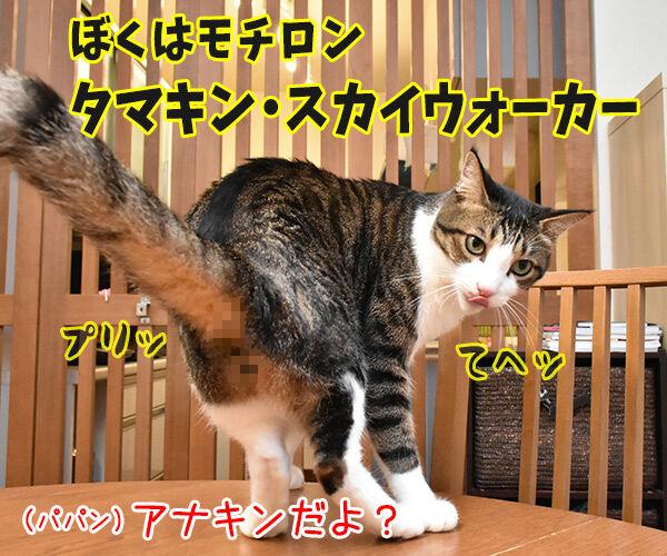 スター・ウォーズごっこするよーッ 猫の写真で4コマ漫画 2コマ目ッ