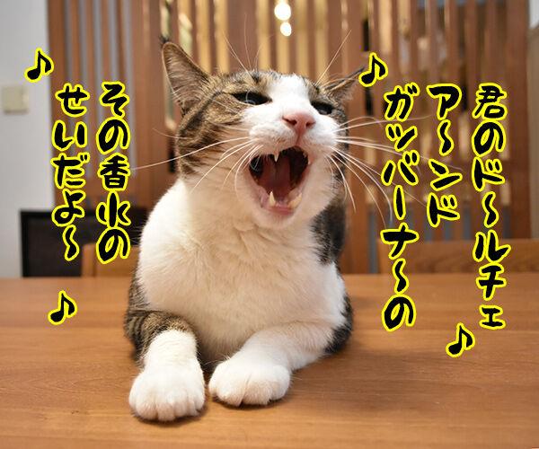 瑛人の「香水」って曲は猫さんも大好きなんですってッ 猫の写真で4コマ漫画 3コマ目ッ