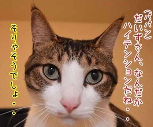 ハイテンションなアタチ 猫の写真で4コマ漫画 3コマ目ッ