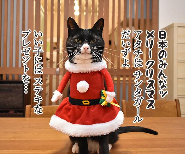サンタガールとサンタボーイがプレゼントをお届けするわよッ 猫の写真で4コマ漫画 1コマ目ッ