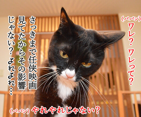 なにしとんねん、ワレ!! 猫の写真で4コマ漫画 2コマ目ッ