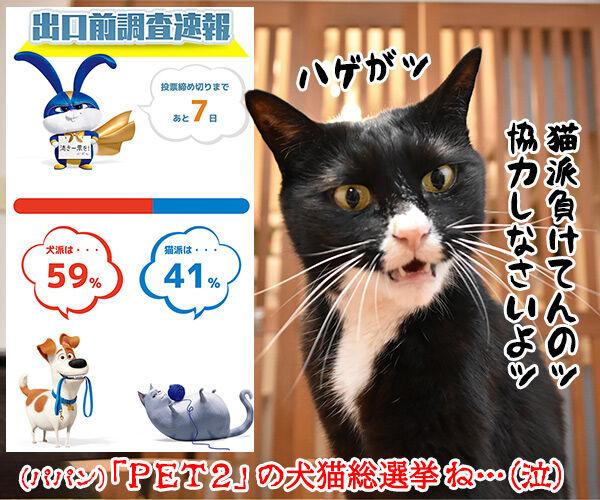 不在者投票に行ったのに? 猫の写真で4コマ漫画 4コマ目ッ