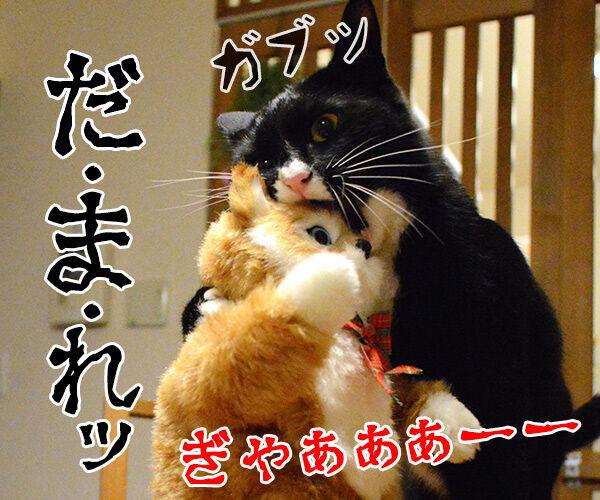 猫田係長 猫の写真で4コマ漫画 4コマ目ッ