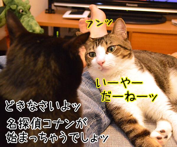 見えないのよッ 猫の写真で4コマ漫画 2コマ目ッ